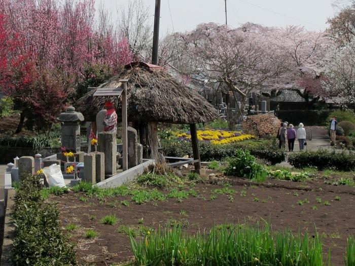 春の風景3.JPG
