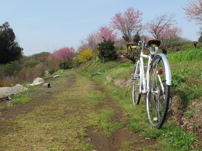 里山の春.JPG